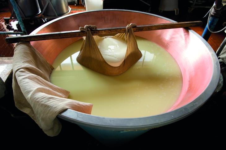 Parmigiano Reggiano CG 2010 _CGF0695
