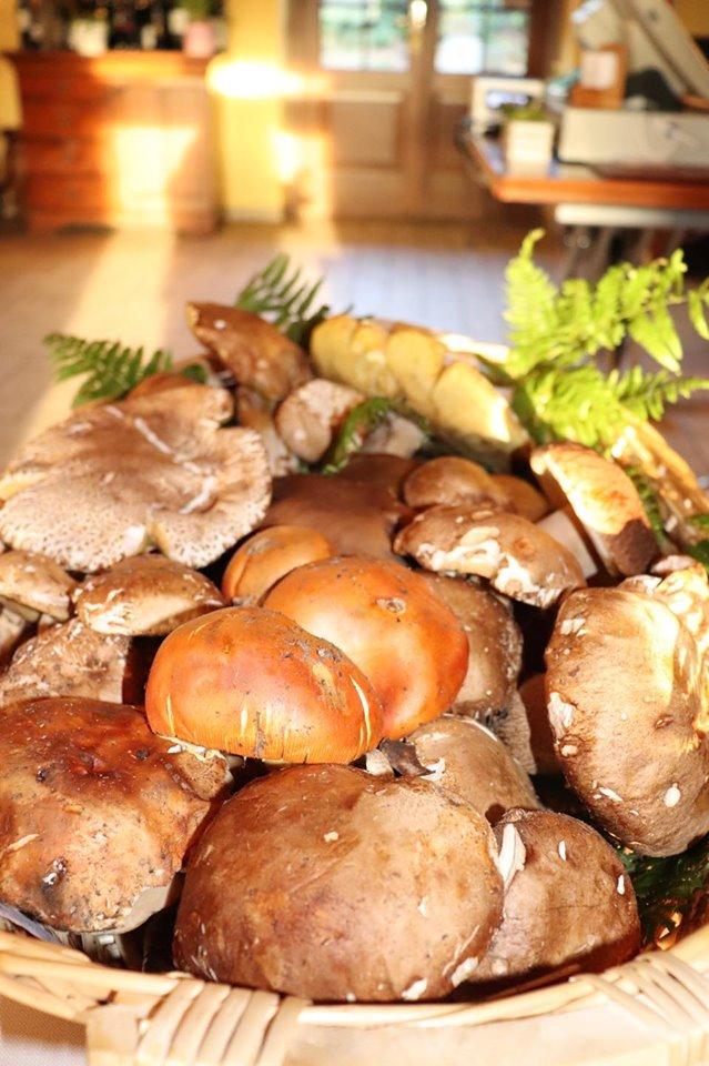 rist bellaria rivergaro porcini freschi