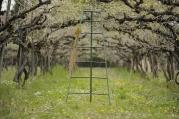 Vineyard_spring